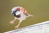 birds at home-0821