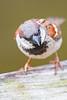 birds at home-0823