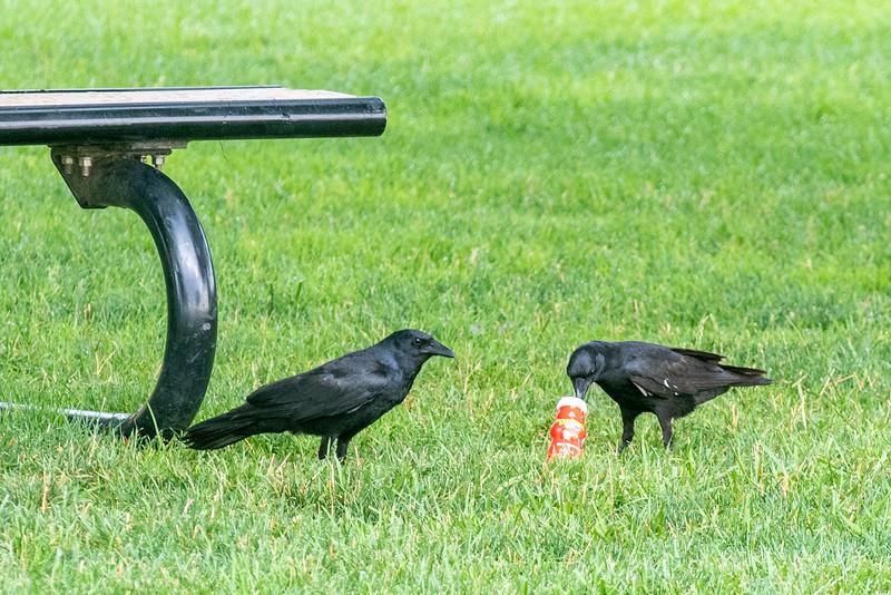 birds at home-0787