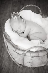 18_KLK_Baby_Penelopea2TT