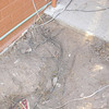 """Lots of trash in this hole.  And lots of loops of extra wire that were just burried to hide them.  No wonder he told us """"I don't remember where I ran it to"""" when we asked him where the mystery romex went."""
