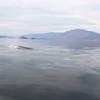 Finback whales near Isla Coronado