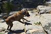 Mason at the Dog Park