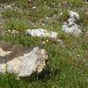 Wild Flowers on Trail Ridge