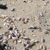 Tiny shells on the beach