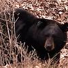 bear 55 across the street