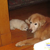 IMG_0303 - 2011-02-25 at 05-45-49