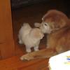 IMG_0304 - 2011-02-25 at 05-45-56