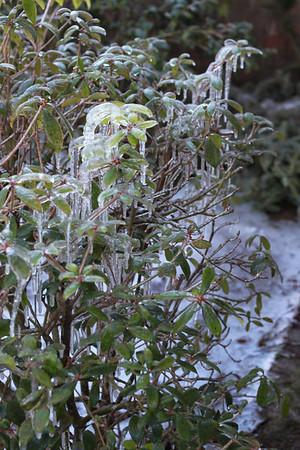 Ice Storm 2014