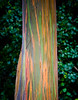 Maui2007Day7-003-6368