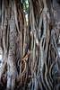 Maui2007Day5-005-6119