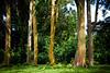 Maui2007Day7-004-6378