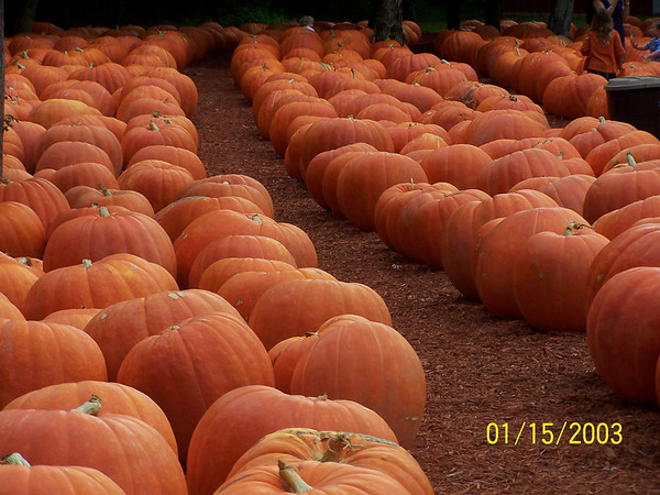 Burt's Pumpkin Farm