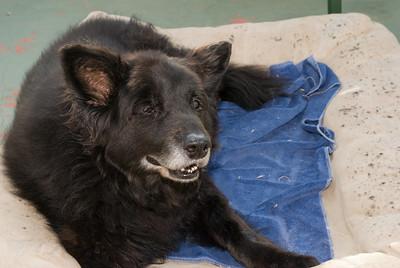 Cody - their 16 year old dog.