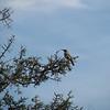 16. bird in tree