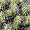 14. cactus
