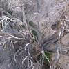 16. cottonwood at spring
