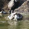 7. turtles on the sides of the river