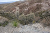 looking down into Burro springs about 200' down