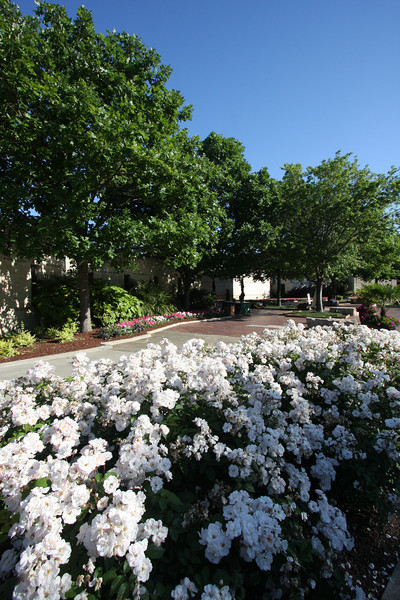 Big Springs Elementary School 2nd Grade field trip - Dallas Arboretum April '10