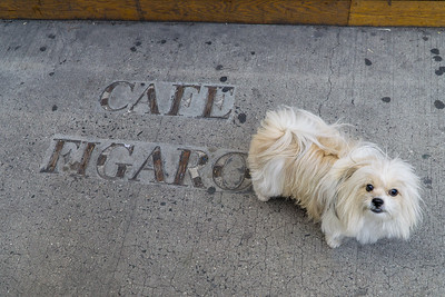Biggie contemplates an earlier era. The only thing left of the iconic cafe is this inscription on the sidewalk corner of McDougal and Bleecker.