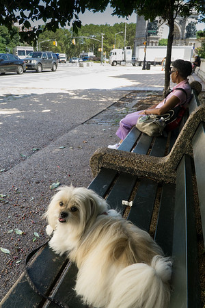 Biggie and I are sitting in the (relatively) cool shade on Prospect Park West. It's stifling and repressively hot and humid out there.
