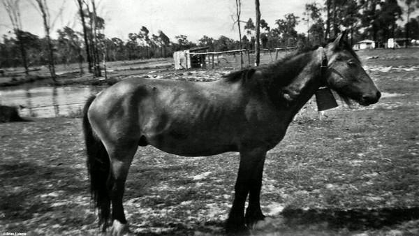 At Boyanda, Chance, one of our three scool ponies we rode through scrub to Barakula State School.