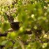 Deer - McKinney Falls State Park, Austin, TX, September 2008