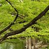 Cypress Tree - McKinney Falls State Park, Austin, TX, September 2008
