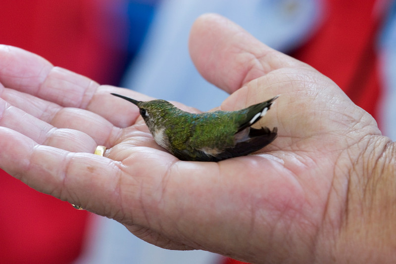 Xtreme Hummingbird Xtravaganza, Lake Jackson, TX, September 2008