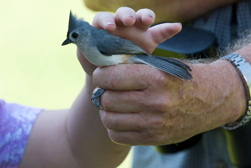 Tufted Titmouse - Xtreme Hummingbird Xtravaganza, Lake Jackson, TX, September 2008