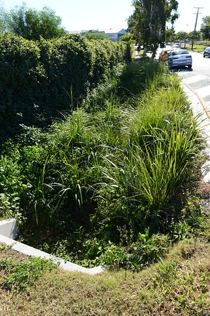 Bioretention Basin - Water Sensitive Urban Design (WSUD) - for Ideanthro