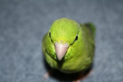 Birds 8-12-09 003