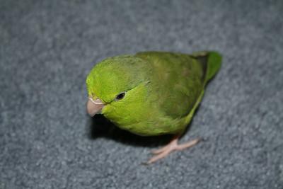 Birds 8-12-09 002