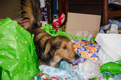 Roxy in a bed of wrapping paper