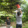Team work - reaching for grapes