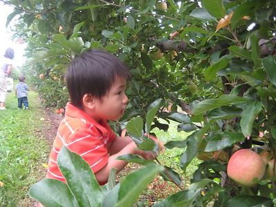Boston 2008 Sept - Fruit Picking with Gavin