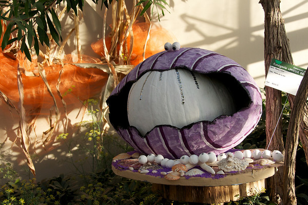 Giant pearl pumpkin