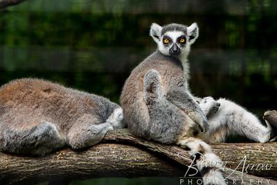 Ft Wayne Zoo 20130707-0039