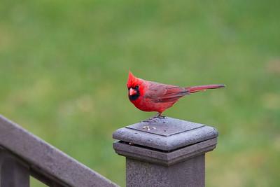 Xmas 2016 Birds-0073