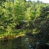 Branson creek