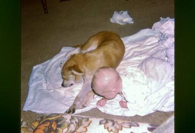 Brad & Dogi