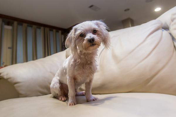 2017-07-30 Sadie Dog
