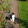 Harvey the happy cat