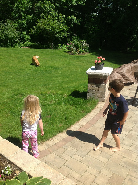 Evan and Lily playing fetch with Reagan