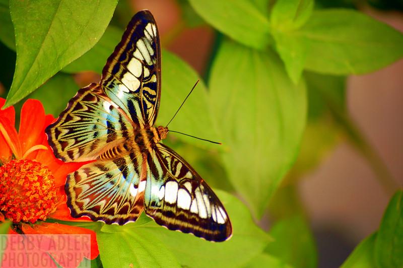 Butterfly Trip 5/21
