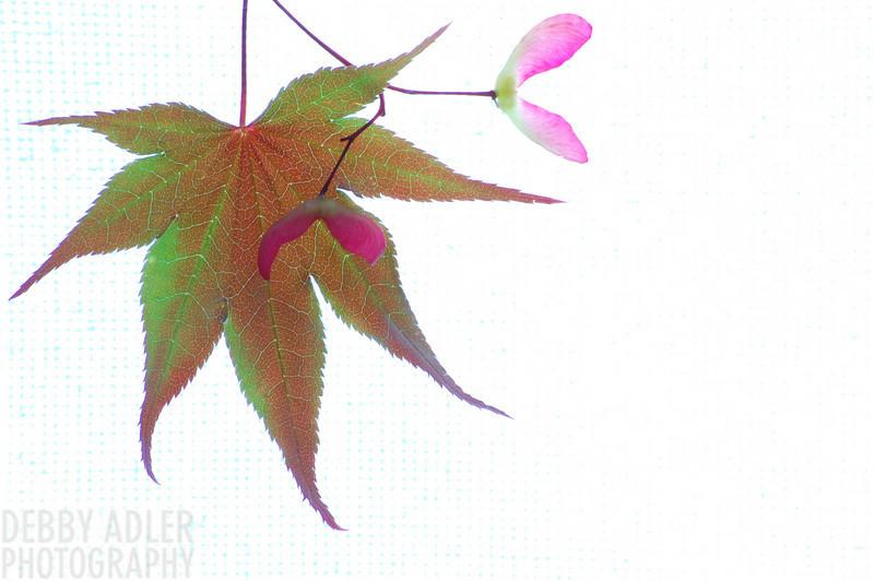 Leaf 5/4