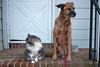 Posing pets