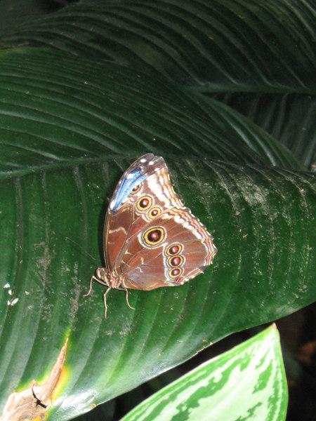 2004-08-17 Butterfly Conservatory 12