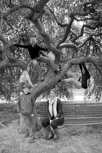 family tree bw